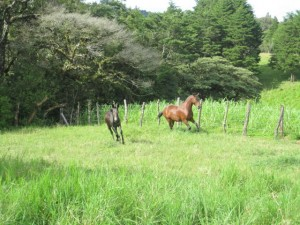 8 day horse riding vacations in monteverde