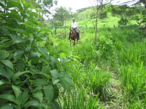horseback riding in Monteverde Costa Rica tour