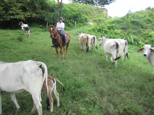 best costa rica horse riding vacation